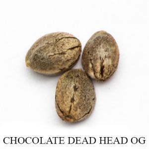 DeadheadOG