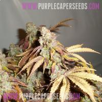 Purple-Cookies
