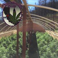 Light Dep Greenhouse (1)